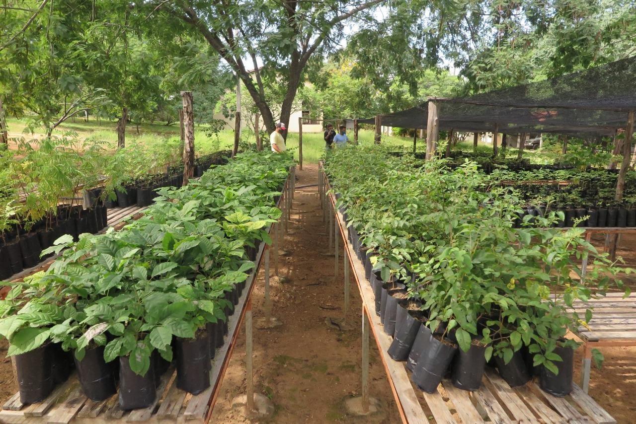 Estação Ecológica de Aiuaba mantém mudas de plantas nativas da caatinga