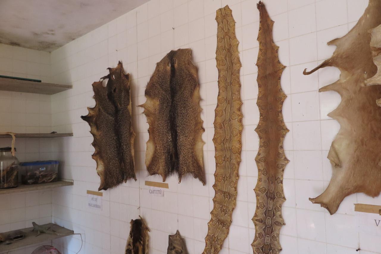 Laboratório expõe peles de animais apreendidas
